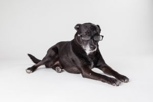 Obedient-looking dog wearing glasses